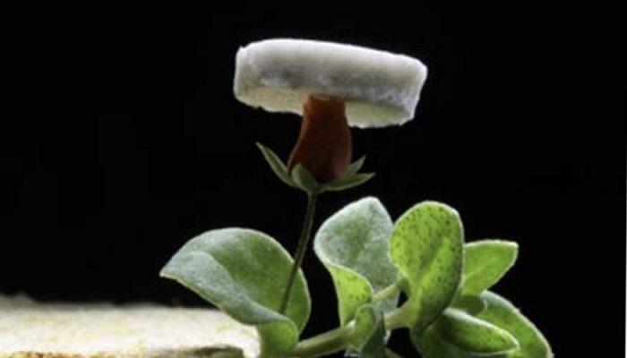 Aerogel de plata sobre una flor